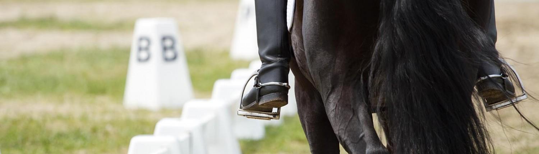 Nærbilde av hest ved ridebane